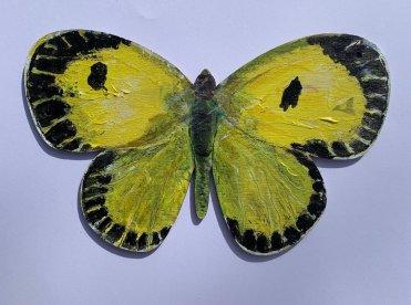 Butterfly 34