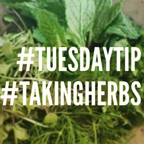 Tuesday Tip # 6 #taking herbs #chitchaatchai