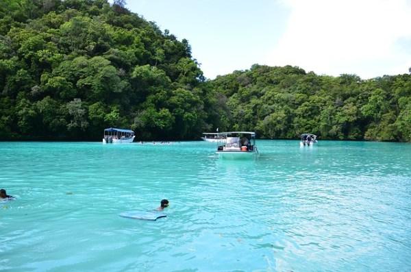パラオ ビーチ イルカ サンゴ礁
