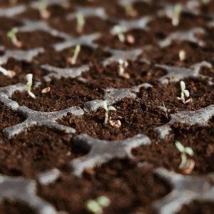 種子 スマートアグリ