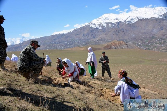 Chitral students are participating in a plantation campaign raised by District Administration and Forest department in Qaqlasht Mastuj pic by Saif ur Rehman Aziz23