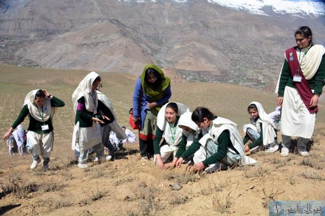 Qaqlasht plantation chitral for dawn23