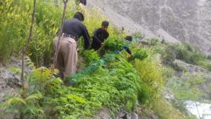 chars kasht chitral 1 scaled