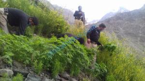 chars kasht chitral2 scaled