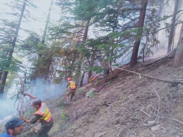 chitraltimes forest caught fire4
