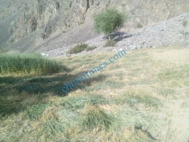 chitraltimes gochgal raman laspur water shortage5