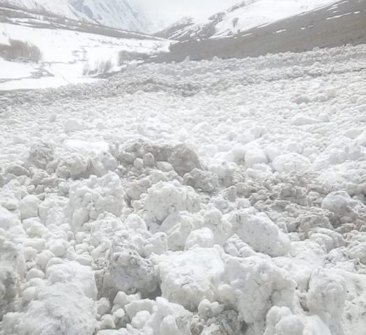 Avalanche kills 35 cows and goats
