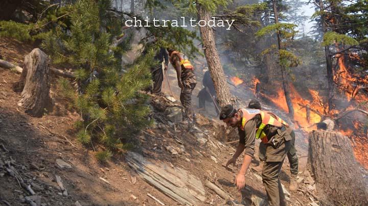 Fire damages forest in Birir