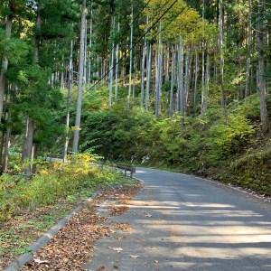 分断国道R152をつなぐ蛇洞林道の風景