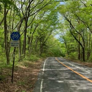 新緑が眩しい林間コースが続くr266