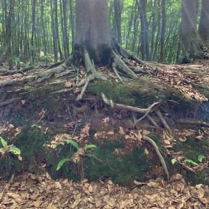 美人な林「美人林」にて⑤