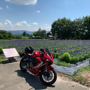 安曇野の山麓線沿いのラズベリー畑with CBR650R②