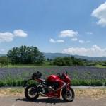 安曇野の山麓線沿いのラズベリー畑with CBR650R