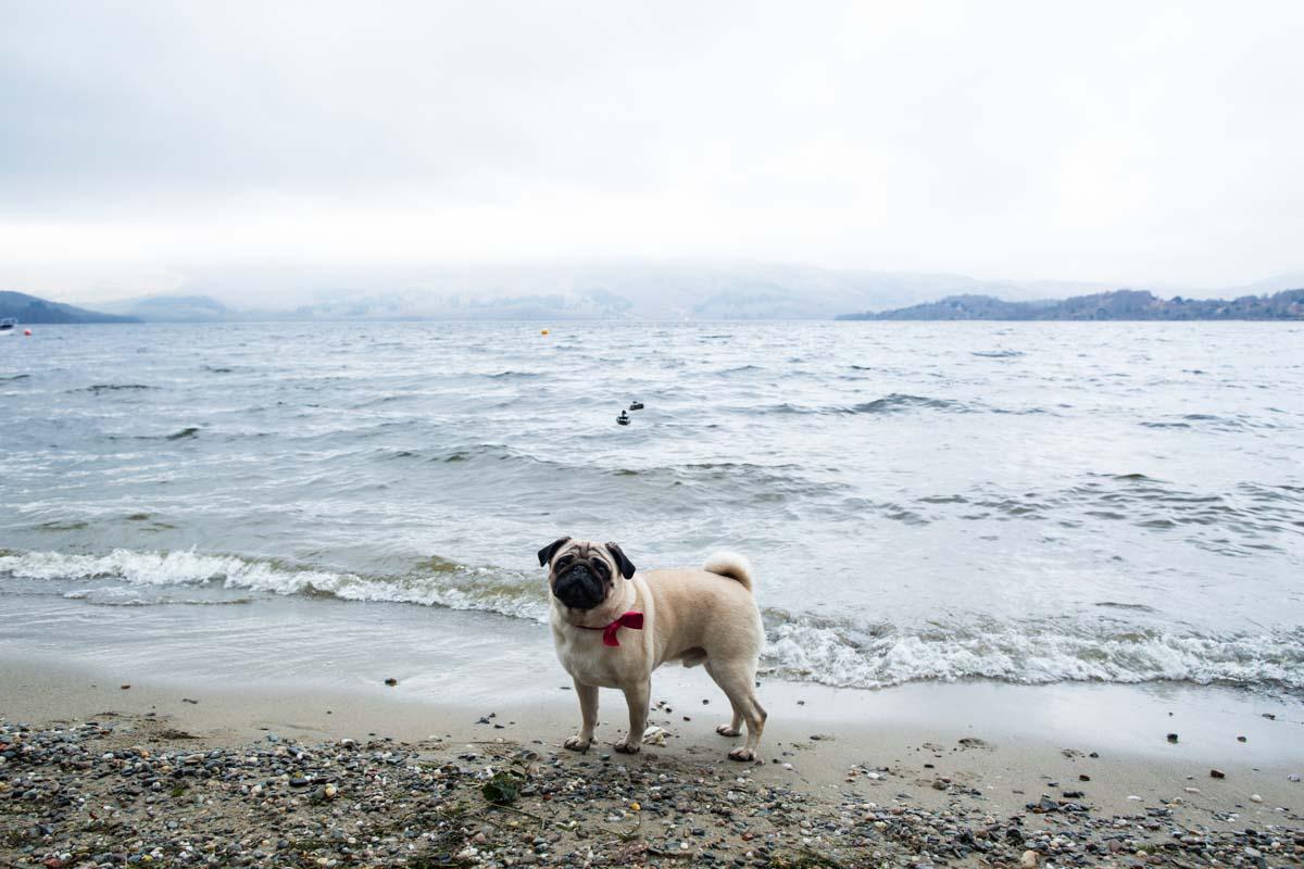 Save the date pet portrait on Loch Lomond beach