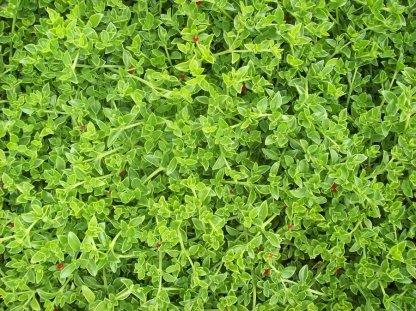 green__green__green__texture_by_cibervoldo_stock-d5cyzql
