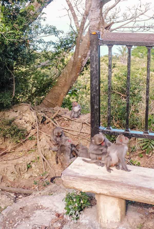 Kaohsiung Itinerary Day 4 | Hike up Shoushan with wild monkeys | #Kaohsiung #Taiwan #Hiking #Monkey #Shoushan