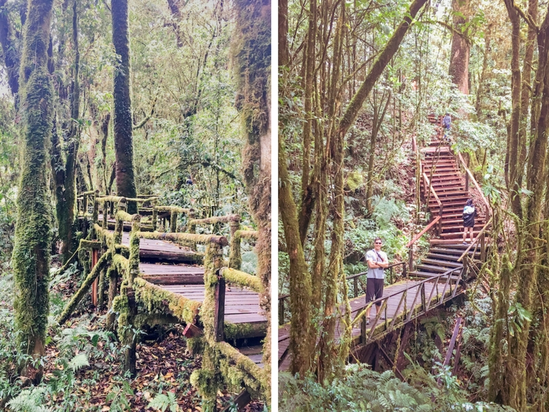 Day Trip from Chiang Mai | Ang Ka Nature Trail - Hike this mystic trail at Doi Inthanon National Park | www.chloestravelogue.com #ChiangMai #Thailand #DoiInthanon #NationalPark #HighestPointinThailand #Daytrip