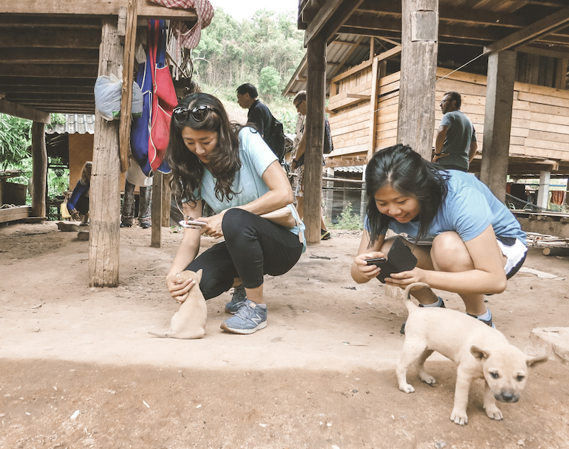 Doi Inthanon Tour: Hmong Hill Tribes Village Dogs | www.chloestravelogue.com #ChiangMai #Thailand #DoiInthanon #NationalPark #HighestPointinThailand #Daytrip #hmong #puppy