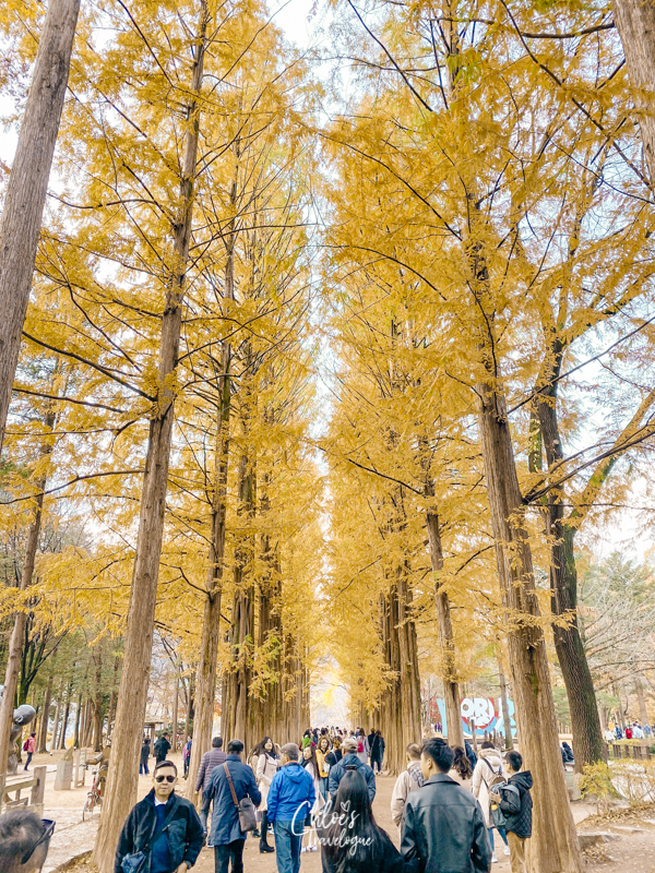 Day Trip from Seoul: Nami Island - Depart from Insadong | #Insadong #Seoul #DayTripfromSeoul #KoreaTravel #AsiaTravel