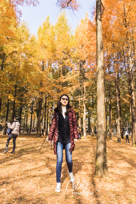 What to Do in Nami Island | 9. Stroll along Tree-lined Roads | #NamiIsland #NamiIslandAutumn #AutumninKorea #travelkorea #asiatravel #Metasequoia