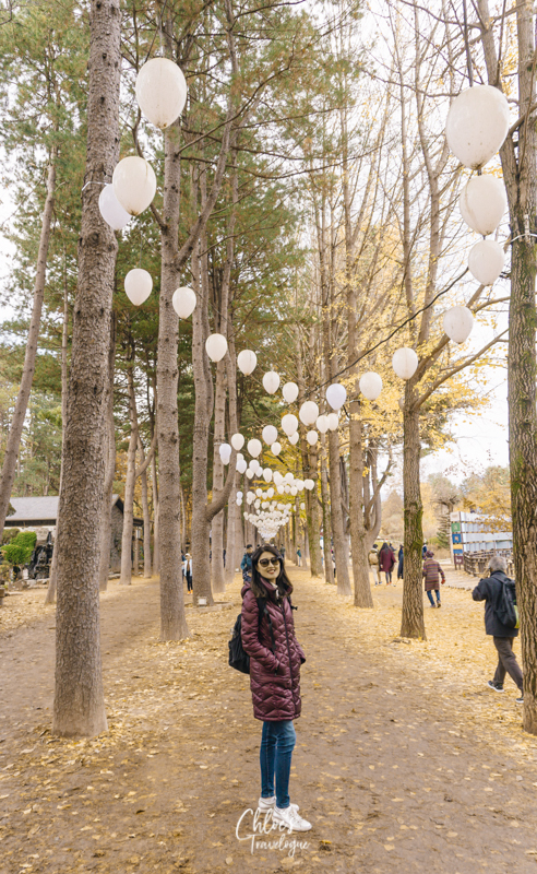 What to Do in Nami Island | 9. Stroll along Tree-lined Roads | #NamiIsland #NamiIslandAutumn #AutumninKorea #travelkorea #asiatravel #KoreanPineTree