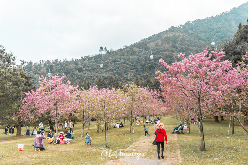 Sun Moon Lake Taiwan: Things to Do + Itinerary | Formosa Culture Village during the Cherry Blossom season || #SunMoonLake #cherryblossom #TaiwanItinerary #TaichungDayTrip #TravelTaiwan #AsiaTravel