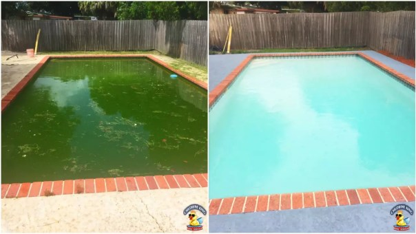 clean pool from green