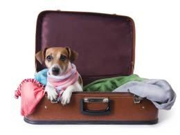 Cómo viajar con tu mascota en un avión