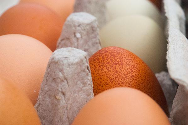122_eggs1