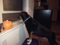 Watching for trick-or-treaters Oct. 31, 2014.