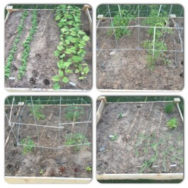 The four sections of the raised garden bed on April 13.