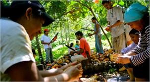 Modern Cacao Harvest