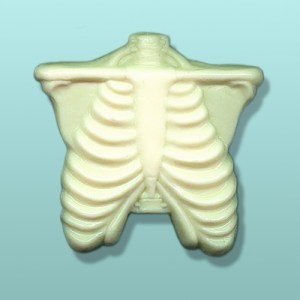 Chocolate Thorax Anatomy Favor