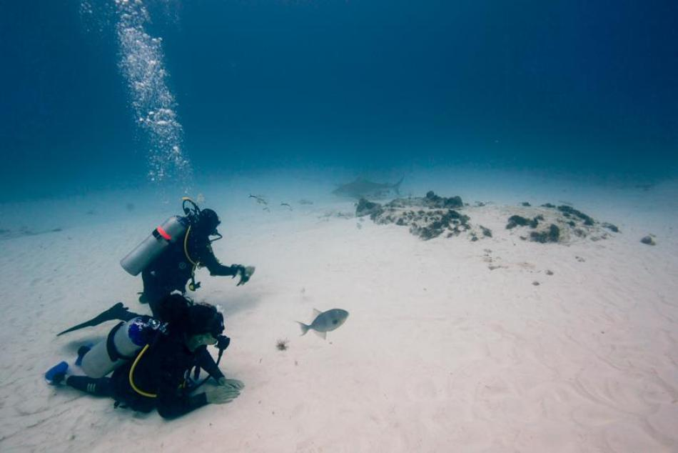 Bullenhaie Mexiko