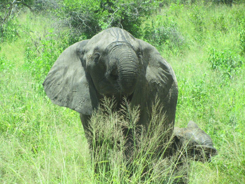 Suedafrika Krügerpark