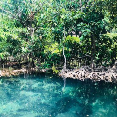 Mangroven Krabi Thailand