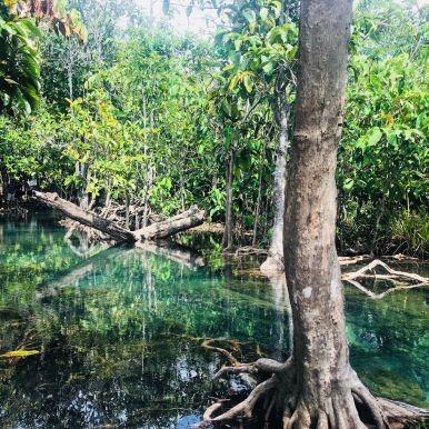 Mangroven Thailand