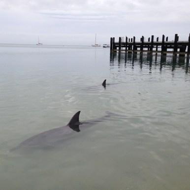 Australien Delfine