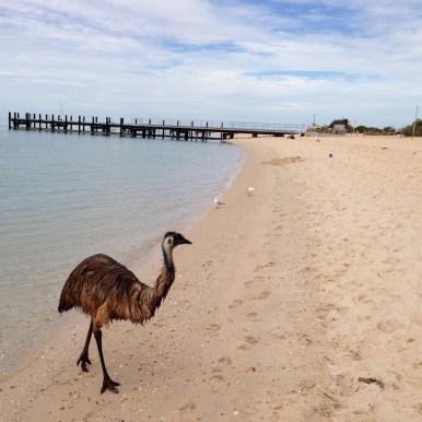 Australien Emu
