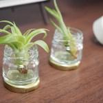 ダイソーの「観葉植物(エアプランツ)」をリビングに置いてみました