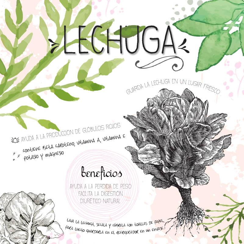 Lechuga Infografía |Chokolat Pimienta