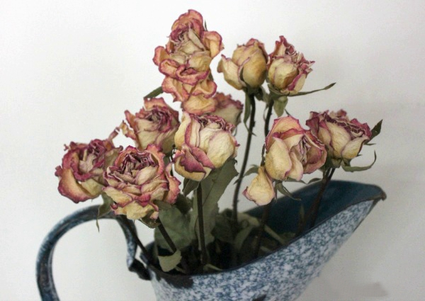 Dried-Rose-2-French-Water-Pitcher