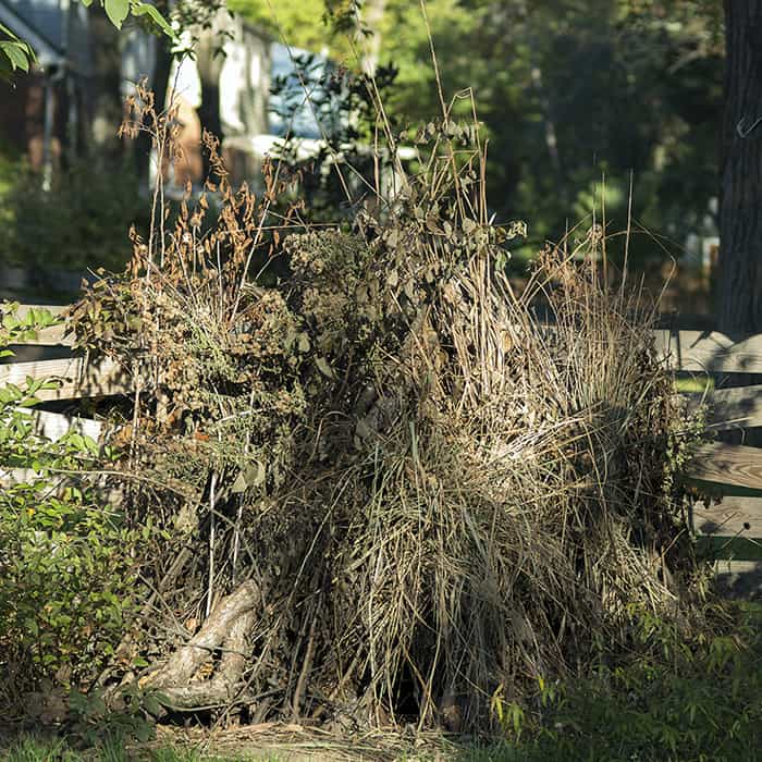 A brush pile that may have too much foliage. It will shelter wildlife, nonetheless.