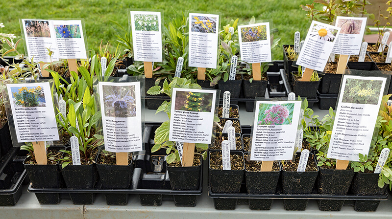 Native plants for sale with identification tags.