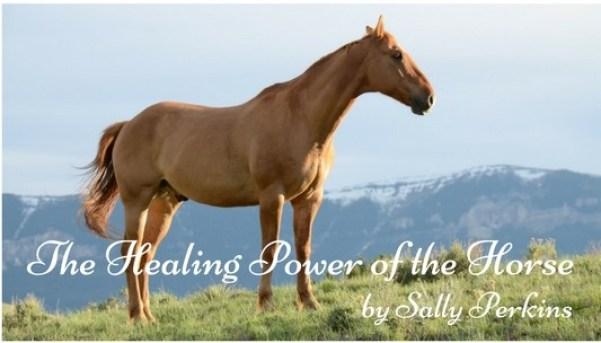 The Healing Power of the Horse