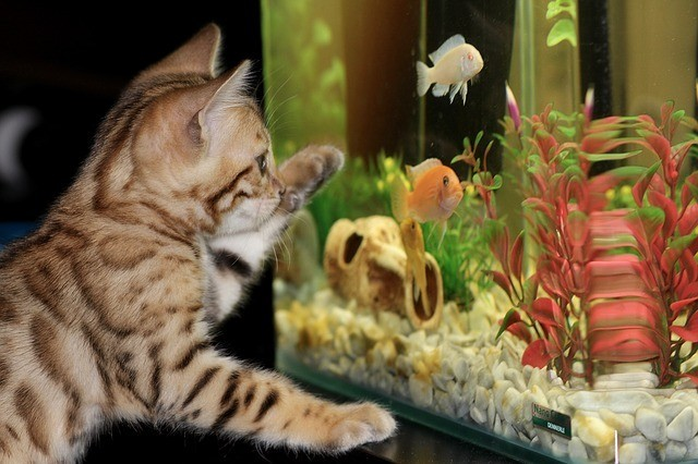 Top 10 Aquarium Fish