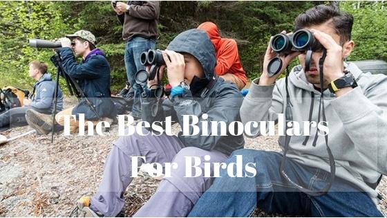 The Best Binoculars For Birds