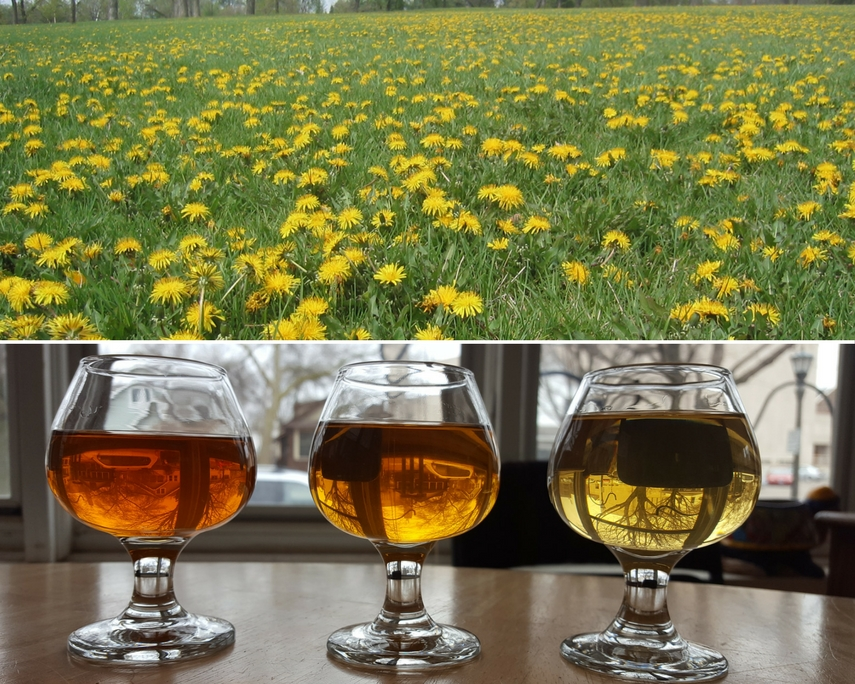 Dandelion Wine Recipes