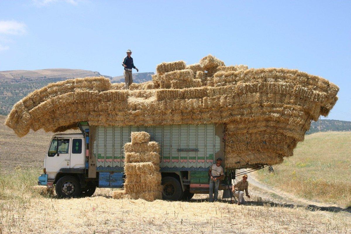 morocco, truck, hay-842660.jpg