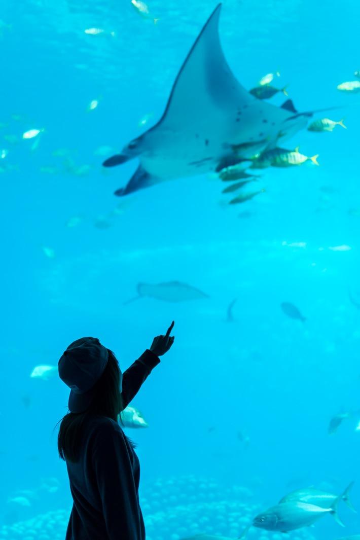Chimelong-Ocean-Kingdom-Aquarium-Ray